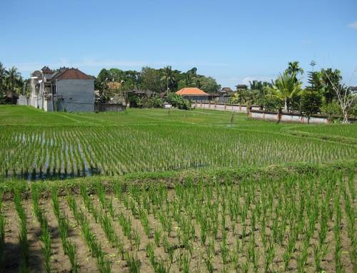 Indien: 66 Millionen Bäume innerhalb von nur 12 Stunden gepflanzt
